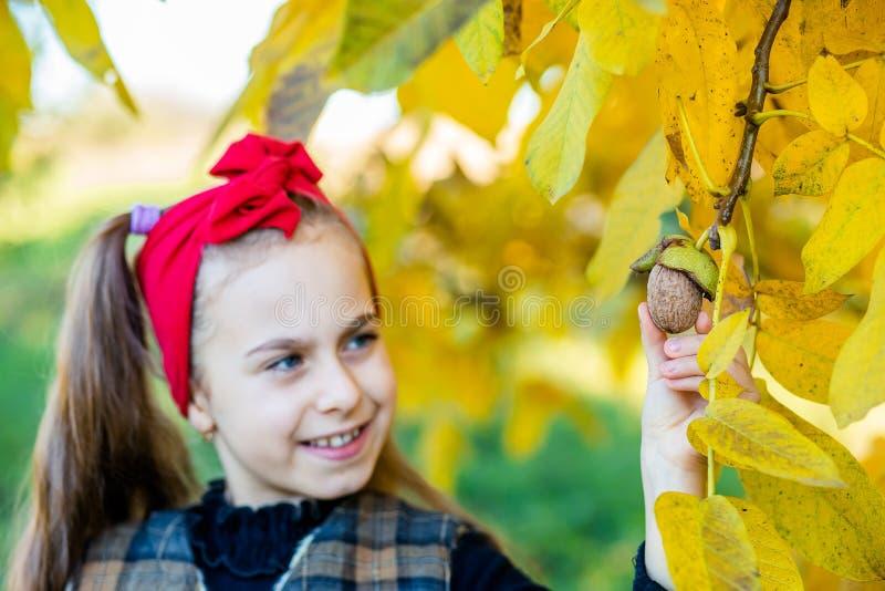 Menina bonito com as nozes da colheita da noz no jardim fotografia de stock
