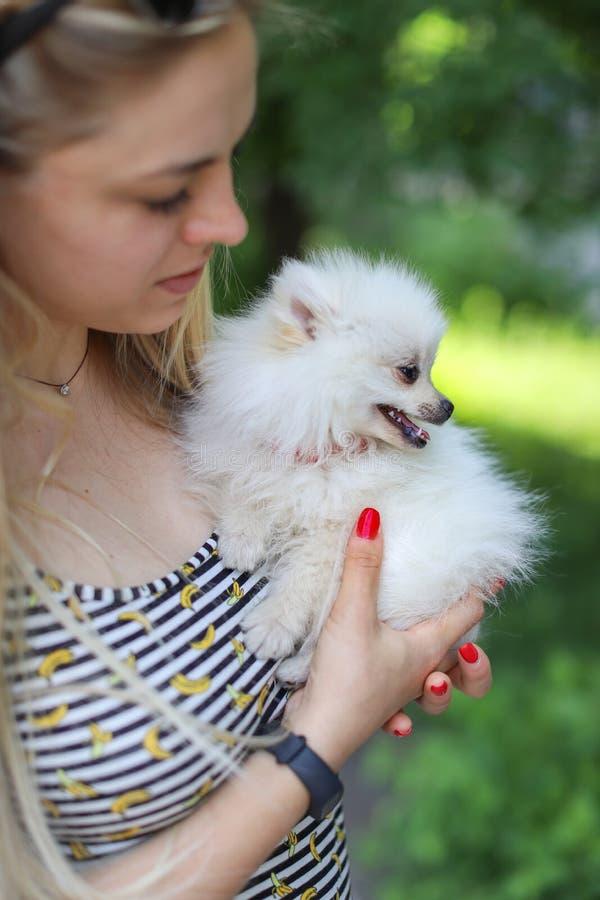 A menina bonito com cabelo louro guarda o cão pequeno da raça em seus braços e exulta-o no animal Cão branco pequeno pomeranian foto de stock