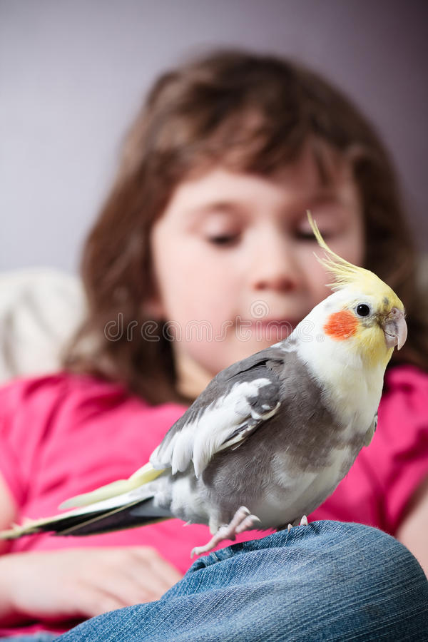 Menina com um cockatiel fotografia de stock