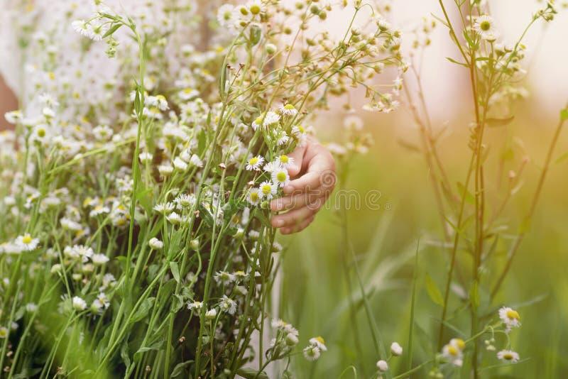 Menina bonito com um ramalhete das camomilas no fundo do campo verde fotos de stock royalty free