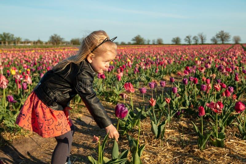 Menina bonito no campo com tulipas coloridas fotografia de stock royalty free