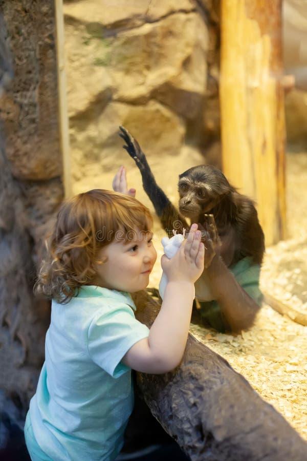 Menina bonito no jardim zoológico, mundo animal de exploração fotos de stock