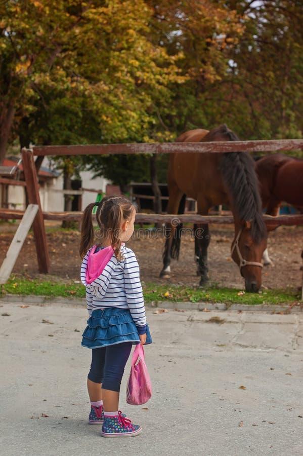 Menina bonito que anda e que olha os cavalos fotos de stock royalty free