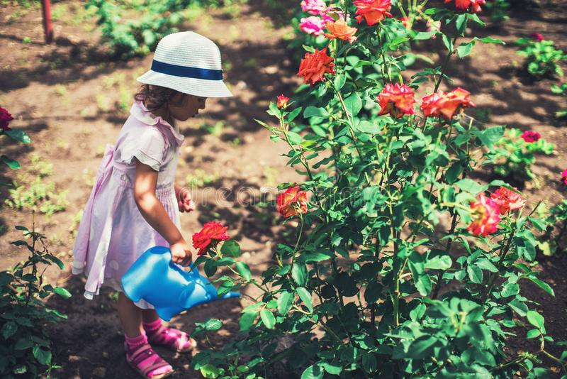 Menina bonito que molha flores cor-de-rosa no jardim fotografia de stock