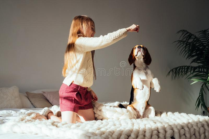 Menina caucasiano nova que joga com seu cão do lebreiro do cachorrinho foto de stock