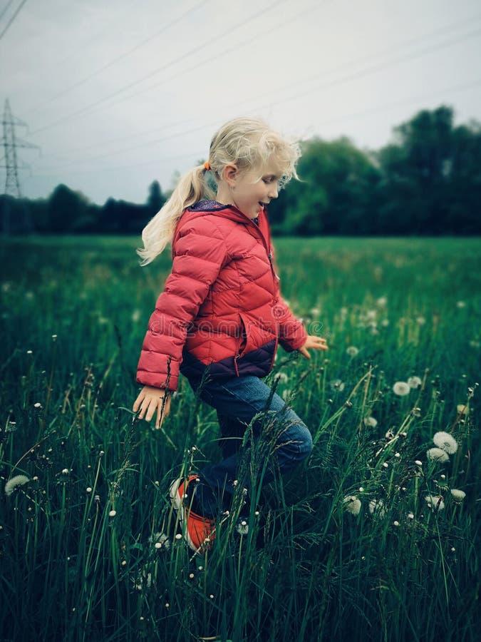 Menina caucasiano que anda entre dentes-de-leão e grama no prado na noite fotografia de stock