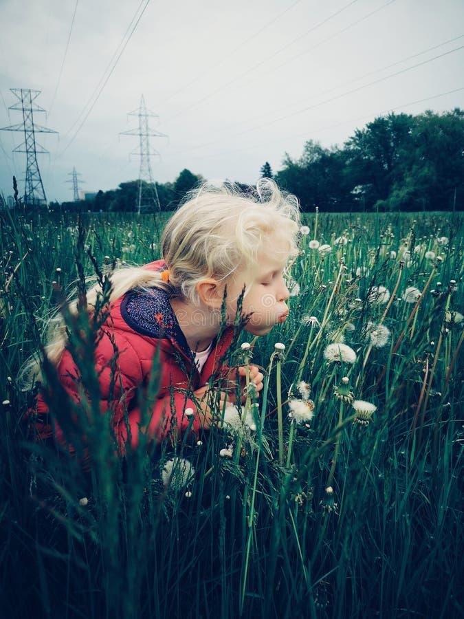 Menina caucasiano que anda entre dentes-de-leão e grama no prado na noite fotos de stock royalty free