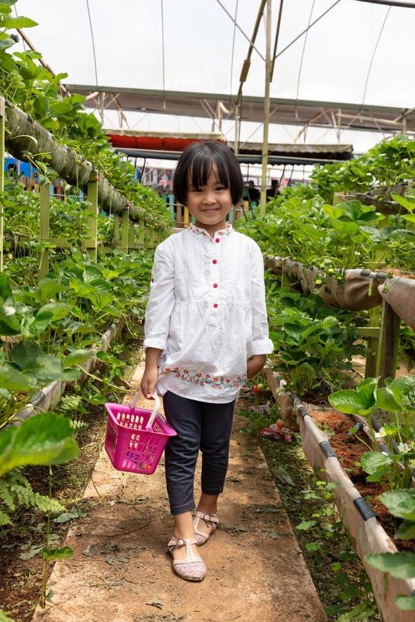 Menina chinesa pequena asiática que escolhe a morango fresca imagens de stock