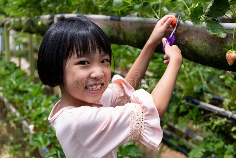Menina chinesa pequena asiática que escolhe a morango fresca fotos de stock