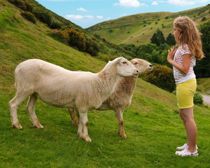 Menina com carneiros foto de stock