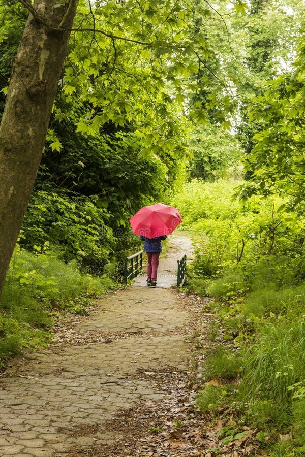 Menina com guarda-chuva vermelho que anda através da floresta imagens de stock