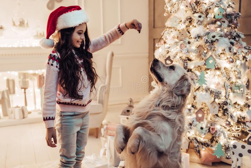 Menina com o cão na véspera do ` s do ano novo fotografia de stock royalty free