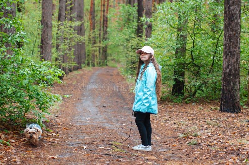 Menina com o cão que anda na estrada na floresta fotografia de stock royalty free