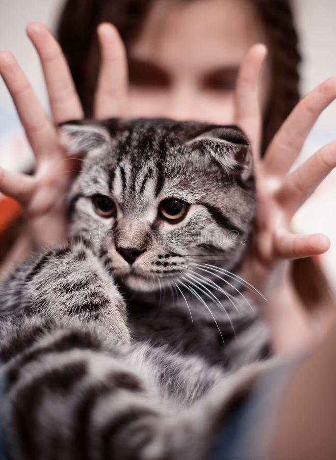 Menina com o gato de tabby bonito foto de stock