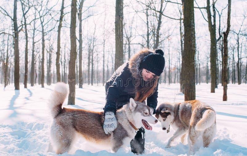 Menina com os cães no parque do inverno fotos de stock