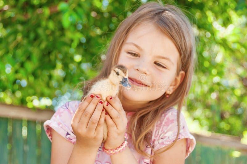 Menina com patinho da mola Aves domésticas nas mãos do c fotografia de stock royalty free