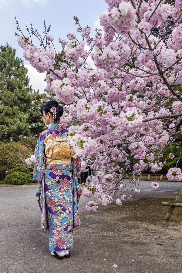 Menina com quimono perto de uma árvore de cereja na flor na estação de mola, Japão imagem de stock royalty free