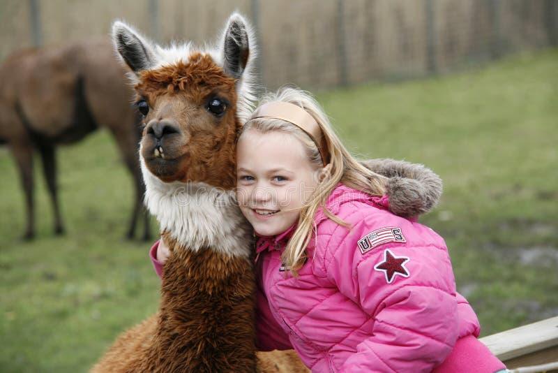 Menina com uma alpaca do lama foto de stock