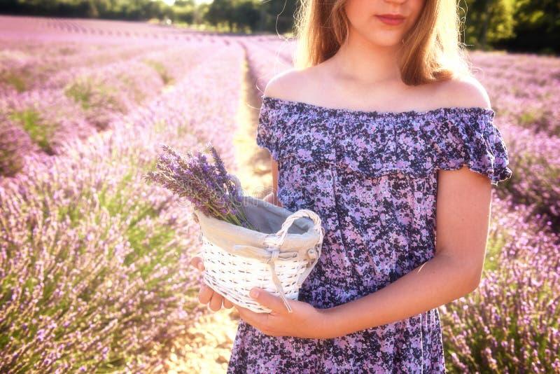 Menina com uma cesta de flores da alfazema em um campo de florescência da alfazema, Provence, França imagens de stock royalty free