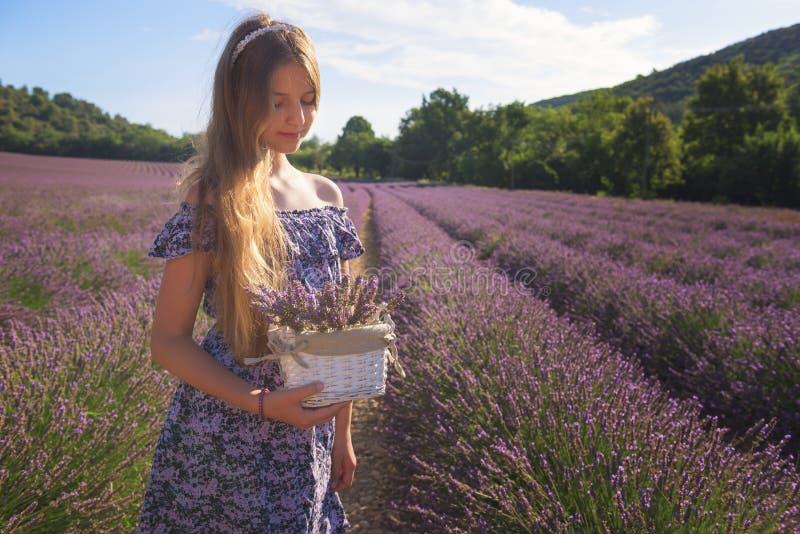 Menina com uma cesta de flores da alfazema em um campo de florescência da alfazema, Provence, França imagem de stock royalty free