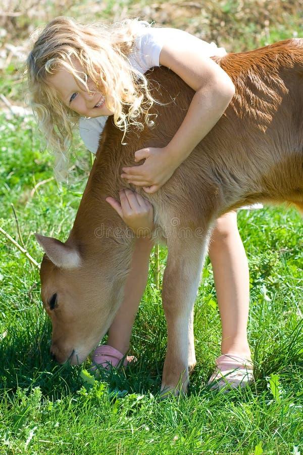 Menina com vitela. foto de stock royalty free