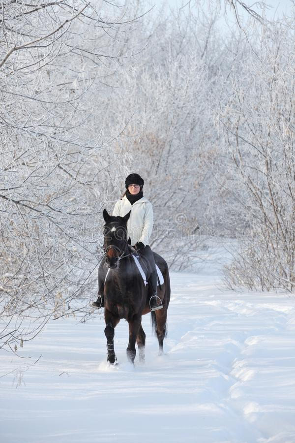 Menina da beleza que monta seu cavalo através dos campos de neve fotografia de stock