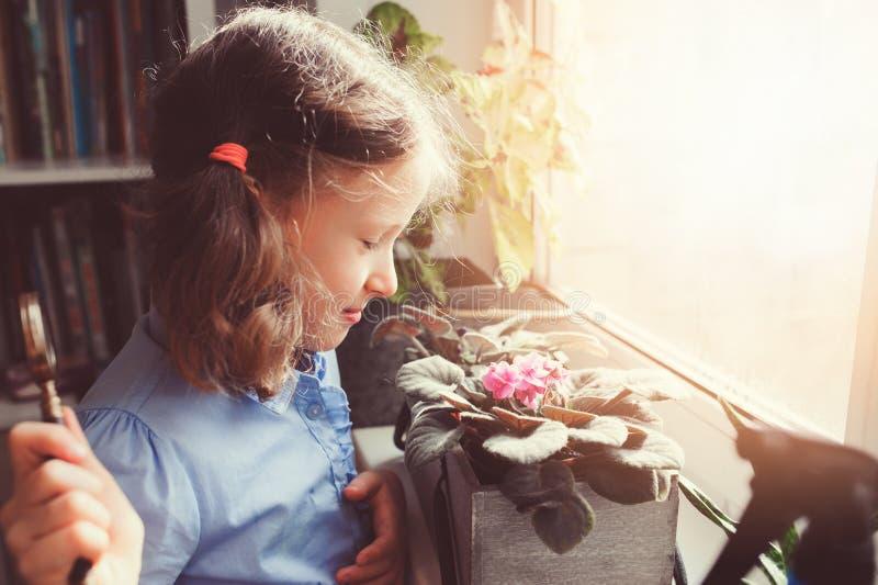 Menina da criança que aprende crescer em casa plantas em pasta, flores home de exploração da criança com lupa imagens de stock