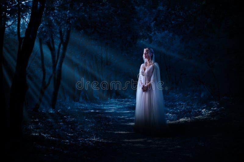 Menina de Elven na floresta da noite foto de stock