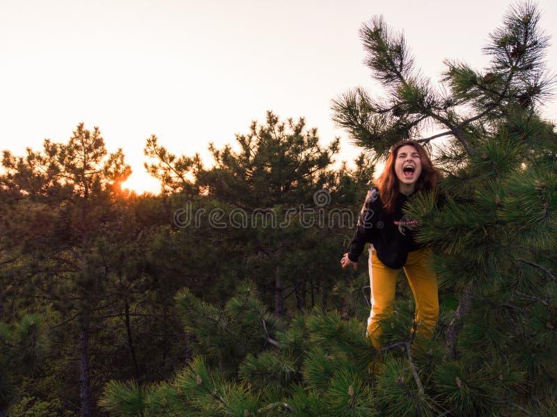 A menina desportiva ativa do ruivo escalou acima na parte superior do pinheiro Tiro aéreo do estilo de vida da jovem mulher na fl foto de stock royalty free