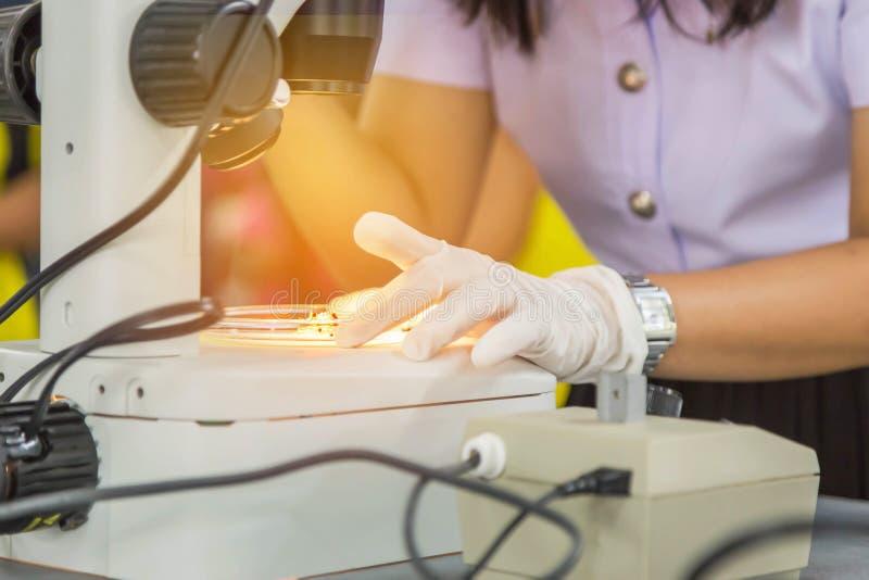 A menina do estudante que olha através do microscópio na pesquisa do estudo de laboratório da ciência experimenta sobre a biotecn fotos de stock