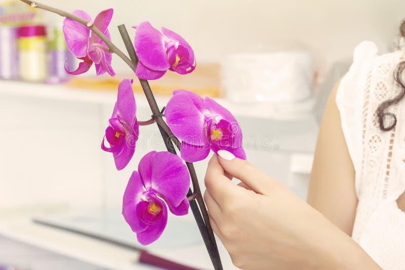 Menina do florista que trabalha em um florista Neg?cio de Floristry Close-up do phalaenopsis cor-de-rosa da orqu?dea Ramalhete de fotos de stock royalty free