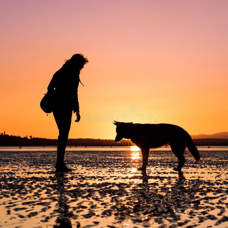 Menina do moderno que joga com cão em uma praia durante o por do sol fotografia de stock