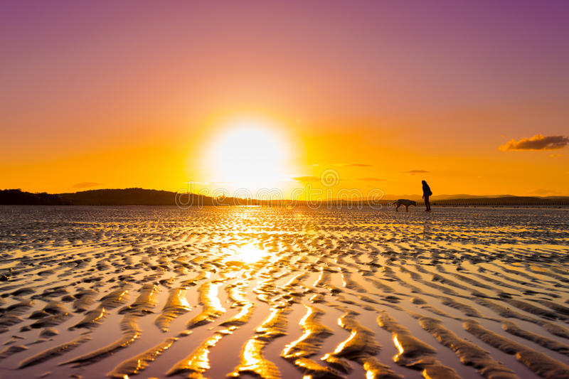 Menina do moderno que joga com cão em uma praia durante o por do sol foto de stock
