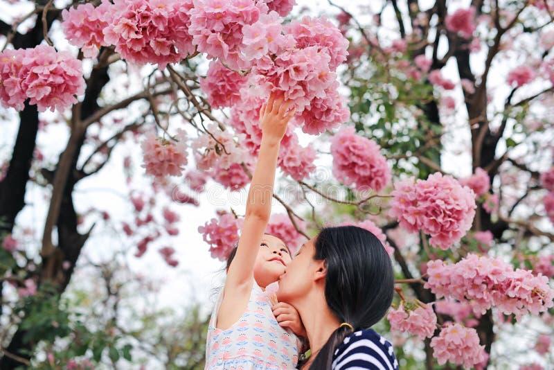Menina do retrato e sua mamã que tocam no rosea bonito de Tabebuia que floresce na estação de mola no jardim exterior foto de stock royalty free