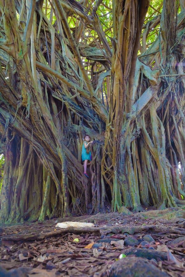 Menina e árvore de banyan gigante imagens de stock royalty free