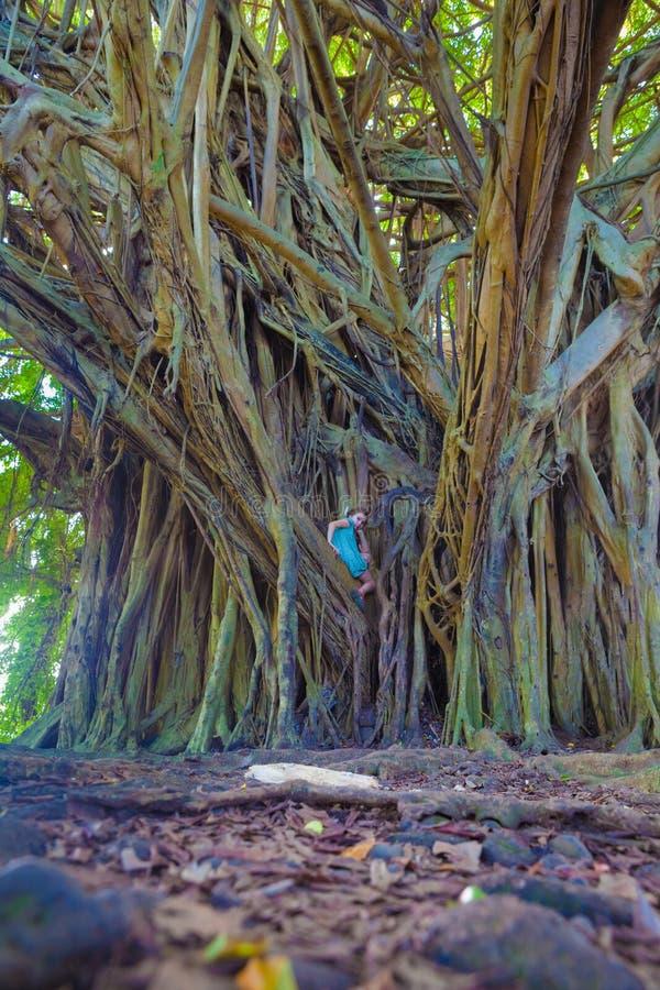Menina e árvore de banyan gigante foto de stock royalty free