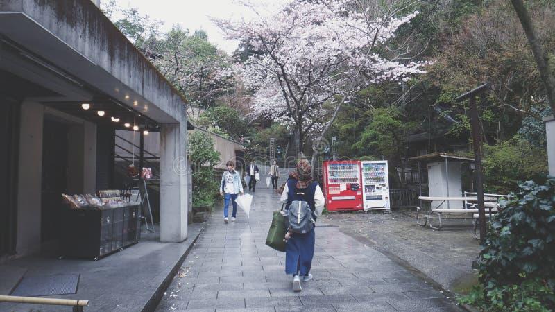 Menina e árvores de sakura fotografia de stock
