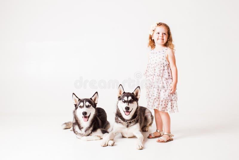 Menina e cão de puxar trenós de dois cães isolado no branco fotografia de stock