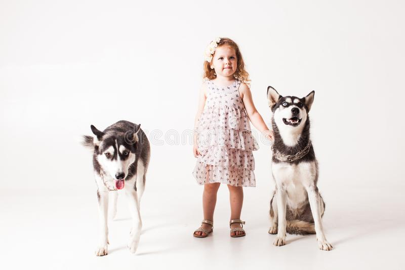 Menina e cão de puxar trenós de dois cães isolado no branco foto de stock royalty free