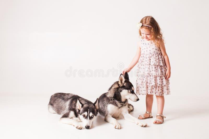 Menina e cão de puxar trenós de dois cães isolado no branco imagem de stock royalty free