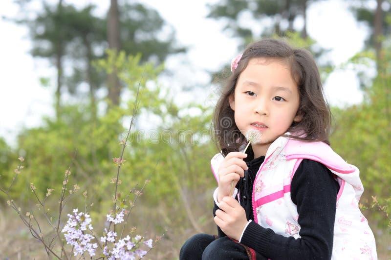 Menina e dente-de-leão asiáticos fotografia de stock