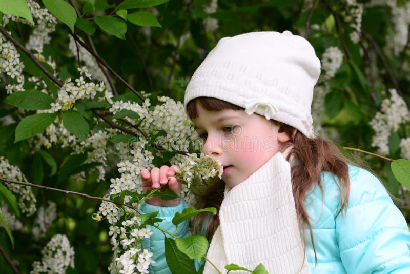 Menina e flor de cerejeira branca imagem de stock