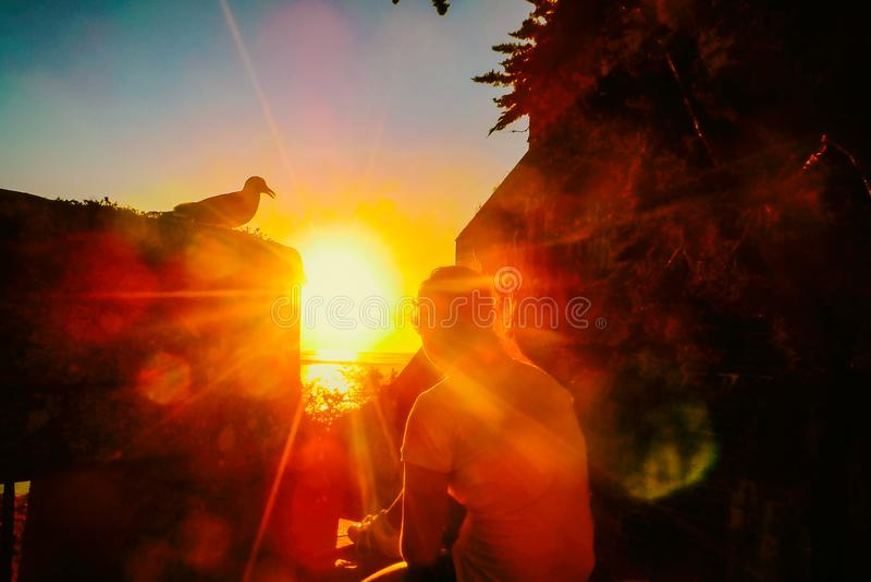 Menina e gaivota do por do sol fotos de stock