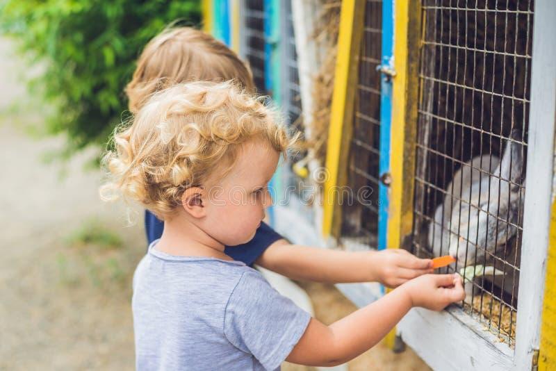 A menina e o menino são alimentados coelhos no jardim zoológico de trocas de carícias fotos de stock
