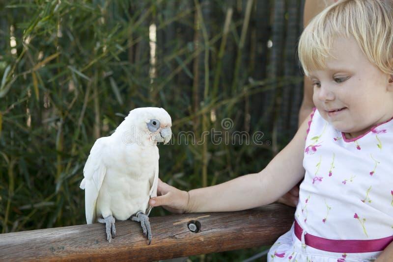 Menina e papagaio foto de stock