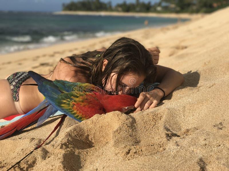 Menina e sua arara na praia imagem de stock