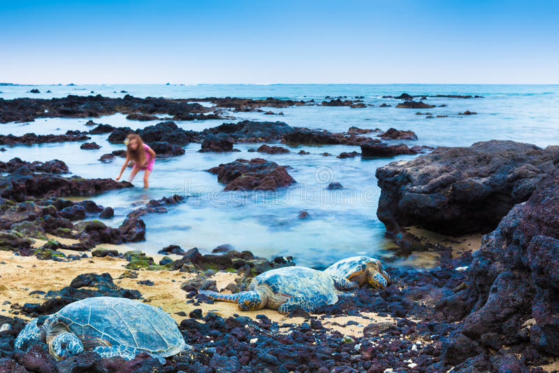 Menina e tartarugas de mar verde imagens de stock