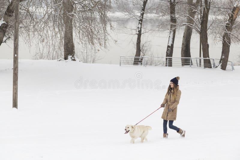 Menina e um cão que anda na neve fotos de stock royalty free