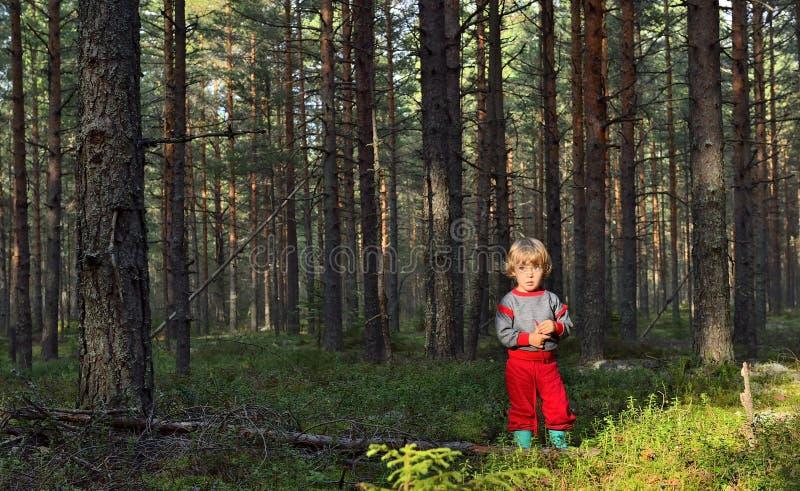 Menina em estar na floresta do pinho no verão foto de stock royalty free