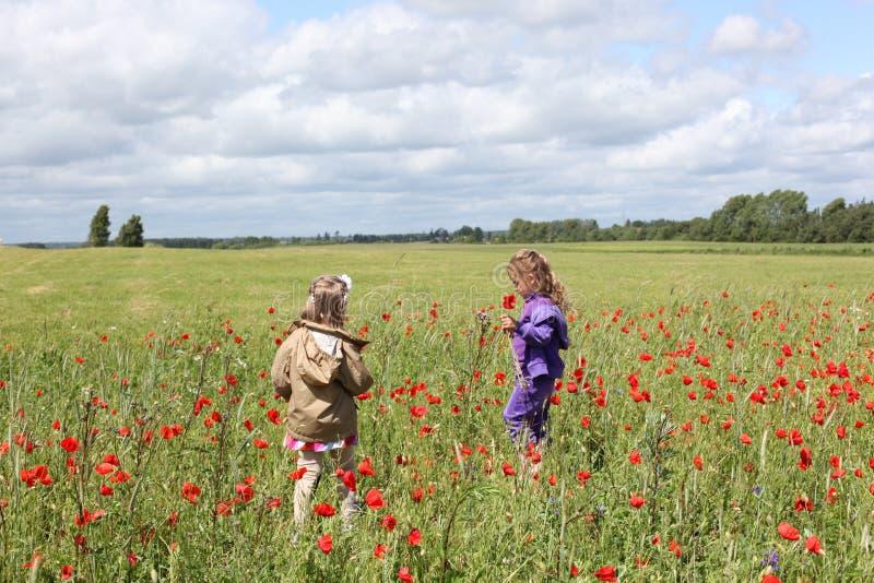 A menina em roxo fecha acima o Hoodie que guarda uma flor vermelha próximo em uma menina no Hoodie de Brown cercado pela re flor  fotografia de stock royalty free
